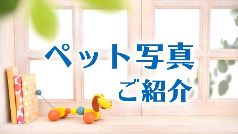 ペット写真ご紹介